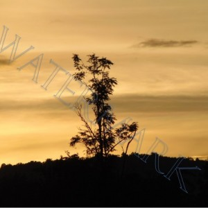 Sunset Tree Sillouette photograph- Matted 8x10 nature photo in art, signed