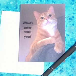 Orange Stripe Tabby Cat Photo Greeting Cards-Handmade Notecard-Cat Photo Notecard-Cat Card-Cat Cards-orange cat-tabby cat-cat art stationery
