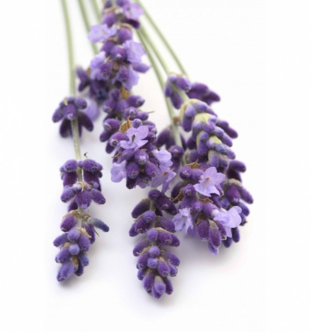 Lavender Essential Oil by Modern Gaia - 15 mL - Buy Any 3 Items, Get 1 Free