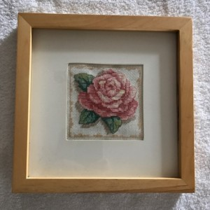 Pink Rose Picture