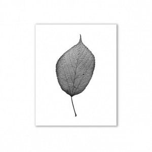 """Leaf Photography, Nature Art, - """"The Queen of the Forest"""""""