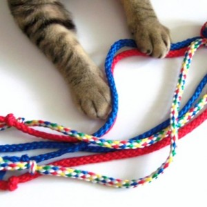 Cat Ferret Dog Toys Toy Handmade Michigan Blue Red Green Yellow White Octopus Toy