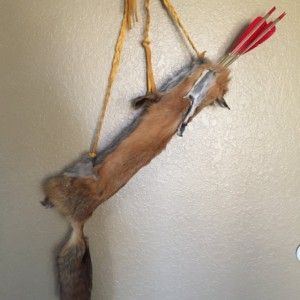 fox quiver with rawhide insert authentic native made
