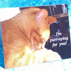 Orange Stripe Praying Cat  photo Greeting Cards-