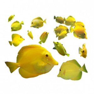 12 Tropical Fish Decals - Yellow Tang Wall Decal Set - Zebrasoma flavescens