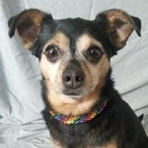 Rainbow Beaded Necklace for SMALL/MED Dogs