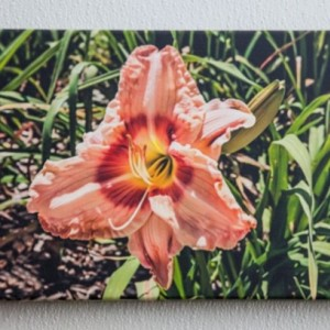 Canvas Wrap photos of Flowers - Set of three 10x14 inch