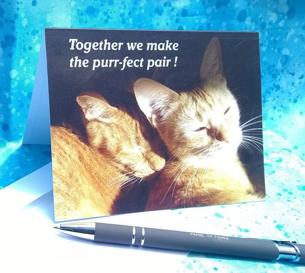 Snuggling Cats--Set of 6 Cat Photo Greeting Cards-