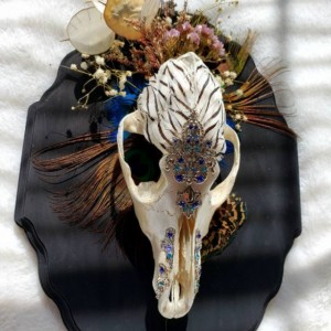 Elegant death. ONE OF A KIND!! // feathered coyote skull // oddity // curiosity
