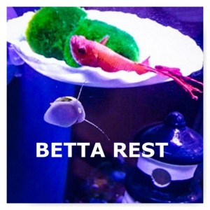 BETTA REST, betta tank decor, Marimo Moss, Marimo Ball Holder, Aquarium, Fish bowl decor, Betta fish rest, Aquarium decoration