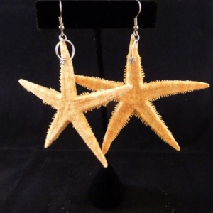 """2"""" Real Orange Starfish from the Philippines Earrings"""