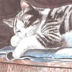 CAT ART PRINT -  9X12  inches  - Gray Tabby Cat Napping -