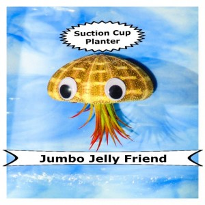 Jumbo Jellyfish air plant, Air plant, air planter, air plant holder, shell planter, Air plants, indoor plants, plant lovers gift
