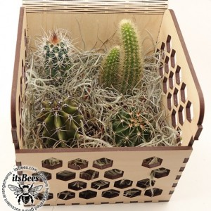 Personalized Cactus 4 Pack in Honey Comb Wood Gift Box - Laser Cut & Custom Engraved