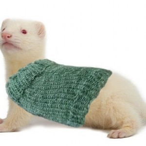 Customizable Pet Extra Stretchy One-Size-Fits-Most Ferret Sweater