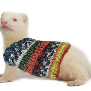 Extra Stretchy Pet Ferret Sweater