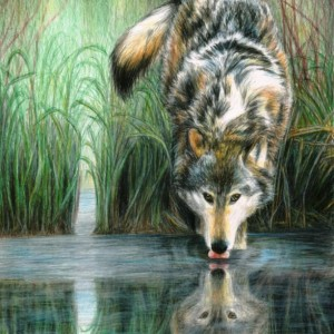 Afternoon Reflection by Carla Kurt signed print