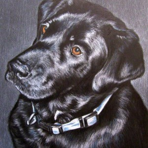 Dog Pet Portrait 5 x 7 Colored Pencil Art by Carla Kurt cat dog horse memorial