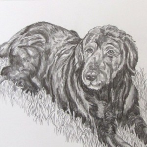 Custom Pet Portrait in graphite pencil horse, dog, cat, any pet! 16x20 drawing, pet painting, dog portrait, cat portrait, ooak drawing,