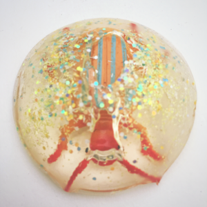 Dissolving Beetle Jelly Resin Paperweight