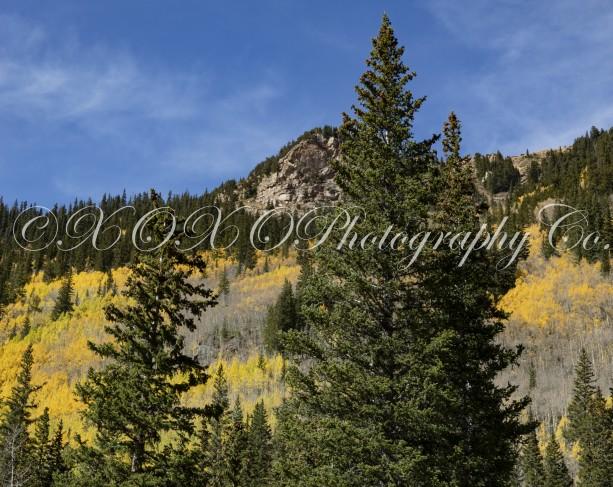 Fall Trees Print