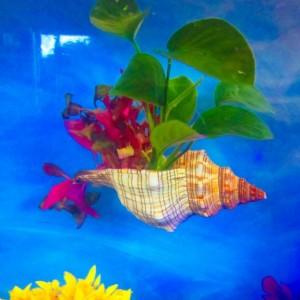Aquarium, Betta fish rest, Fox Conch Shell,  Aquarium decoration, aquarium planter, aquarium plants, fish bowl decor, fish tank decoration