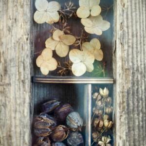 Rustic Nature Shadow Box