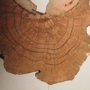 Maple Burls - Wall Hangings