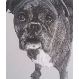 Black and White Pet Portrait
