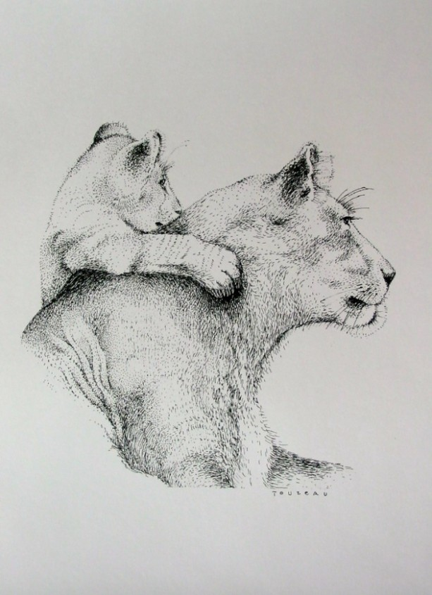 Pen & Ink Drawing of African Lion and Cub