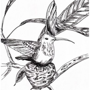 Hummingbird Bird Nest Black and White Original Art Illustration Drawing Ink Nature Animal Home Decor 7 x 10.5