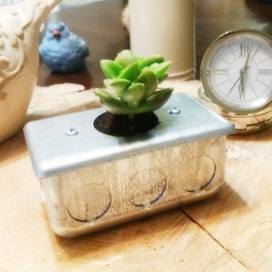 Succulent Desktop Planter