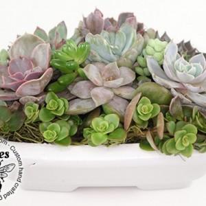 Small Succulent Bonsai Garden - Cactus, Haworthia, Aloe, Sedum - Gift, Housewarming, Home, Office, Window