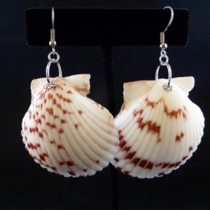 Hawaiian Calico Scallop Shell Earrings