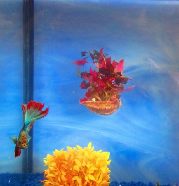 2 Betta bowl Decor, Fish bowl decor, Fish tank Decor, Betta rest, Aquarium plant holders, Aquarium plants, fish bowl decoration, Beta rest