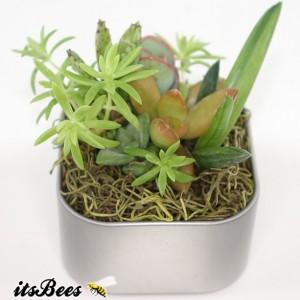 Mini Live Variety Mix Garden Magnet - Succulent, Sedum, Cactus, Haworthia, Aloe