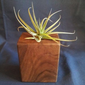 Decorative Walnut Vase