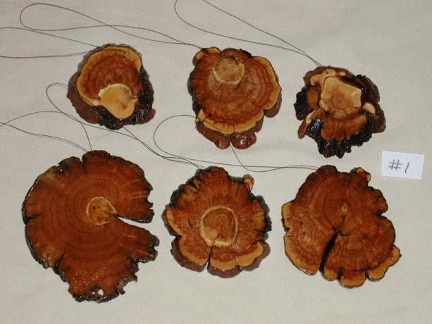 Pine Burl Slices  #1