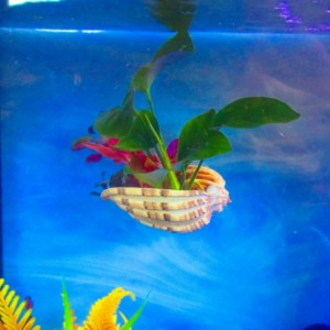 Aquarium decoration, aquarium plants, Fish bowl decor, Aquarium, Betta fish rest,  aquarium planter,  fish bowl decor, fish tank decoration