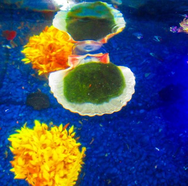 Marimo moss ball holder aftcra for Betta fish moss ball