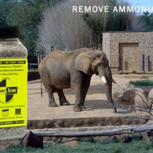 AMMOSORB Eco Ammonia Smell Eliminator Deodorizing Granules: 50 lb.