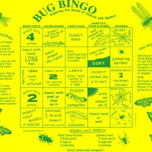 Bug Bingo Fundana