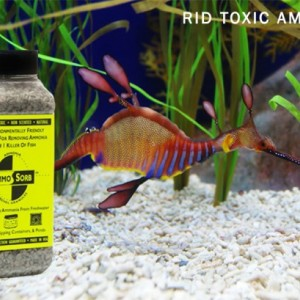 AMMOSORB Natural Aquarium Ammonia Removal Deco Rocks: 50 lb.