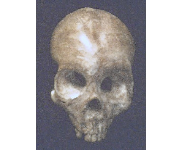 Human Skull Decayed Gothic Wall Hanging Halloween Prop Brown Dead Bone Horror Cemetery Decor Bizarre Spooky Haunt Faux Taxidermy Plaque