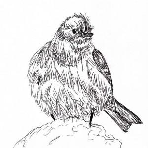 Yellow Rumped Warbler Bird Black and White Original Art Illustration Drawing Ink Nature Animal Home Decor 10 x 7.5