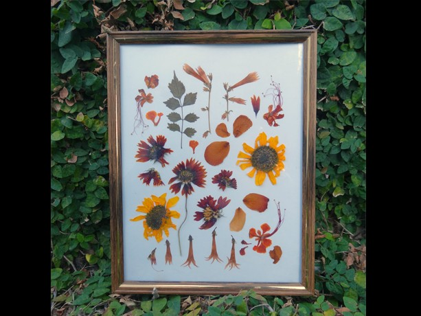 Pressed Flower Frames - Series 1 - #1