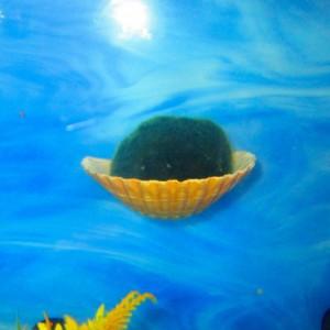 Marimo Moss, Marimo Ball Holder, Aquarium, Fish bowl decor, Betta fish rest,  Aquarium decoration, aquarium planter, aquarium plants planter