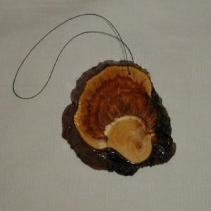 Pine Burl Slices  #1
