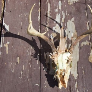 OOAK Steampunk Crystal Deer Skull with Antlers