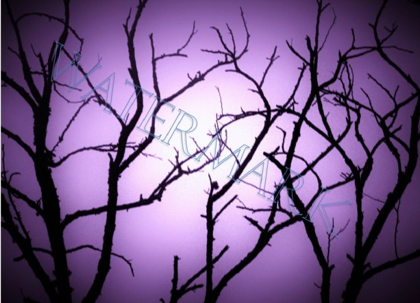 Purple Haze Tree Sillouette photograph- Matted 8 x10 nature photo in art